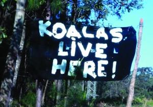 Koala army 2