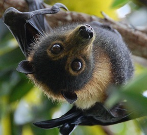 [Insert pun about bats here]. Source: Supplied
