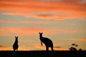 Aussie Silhouette Source: Flickr