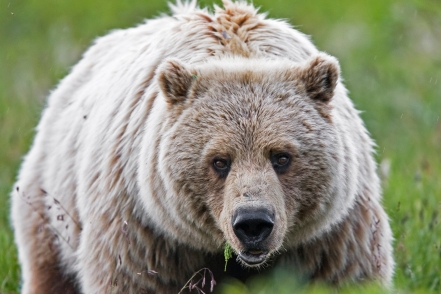 Chase Dellwo was attacked by a grizzly bear while hunting elk. Source: Denali National Park and Preserve.