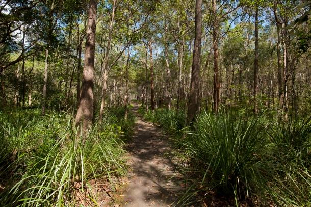 Brisbane_Koala_Bushlands_(7114374289) (2).jpg