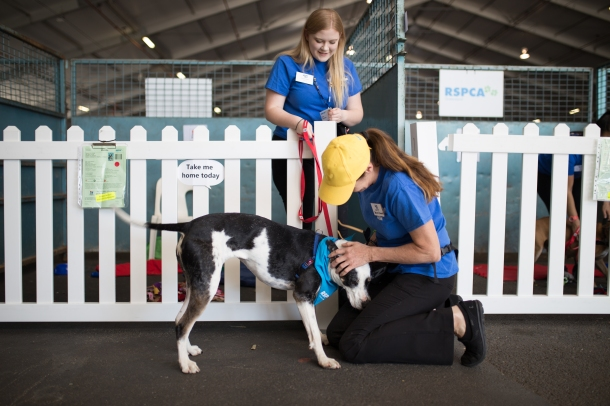 RSPCA volunteers at this years Big Adopt Out
