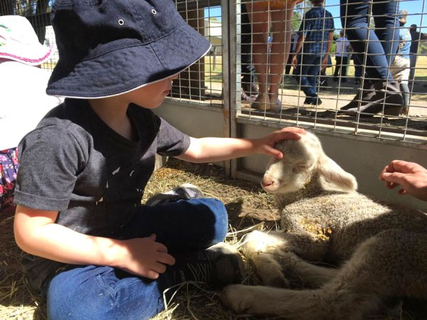 Patting at lamb Gold Coast Show