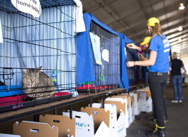 RSPCA Big Adopt Out cats