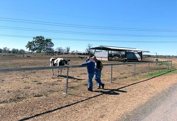 Toowoomba dairy farmer