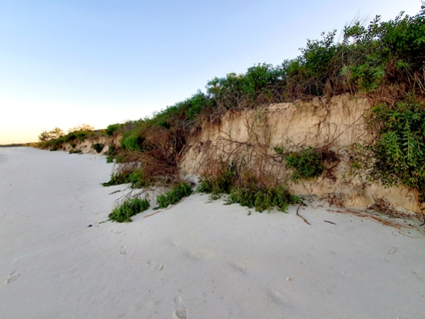 Dune erosion at New Brighton beach